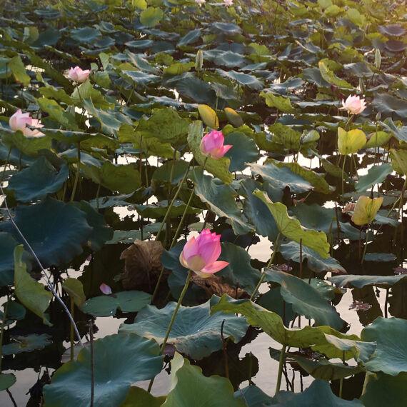 Lotus Technology