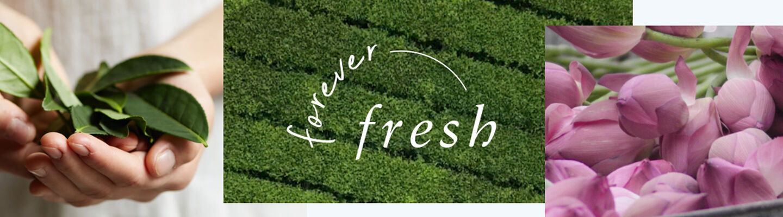 Forever Fresh