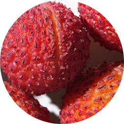lychee seed