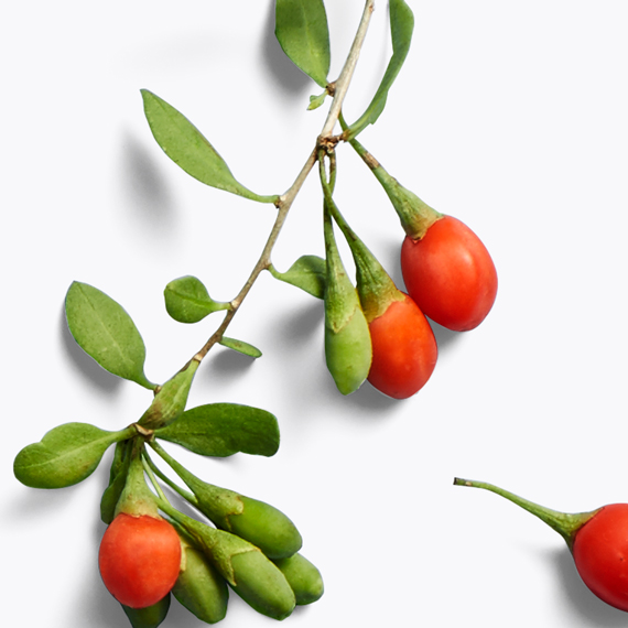goji fruit
